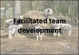 facilitated team development programmes