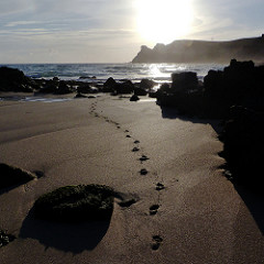 Footprints 240x240